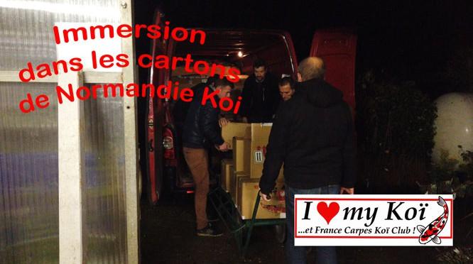 Immersion-dans-les-cartons-de-Normandie-Koi